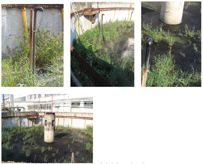 Vyústění nátoku kalové vody, rozmístění náletových dřevin topolu a vrby na stanovišti a celkový pohled na porost v letním období