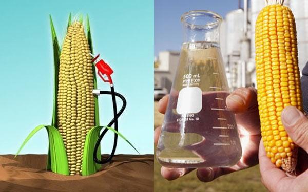 ilustrační foto - kapalná biopaliva