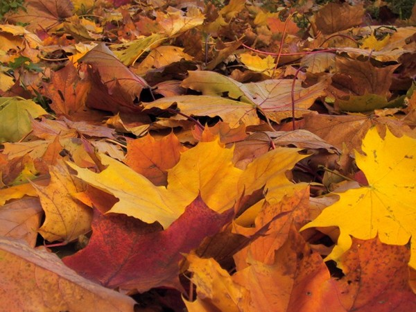 Co s listím a trávou z našich zahrad? Kompostovat...