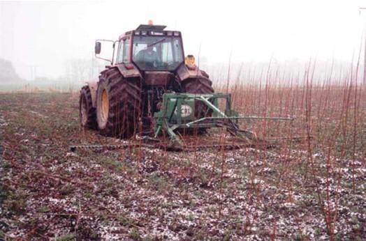 Technický rez vykonaný v zime po prvom roku
