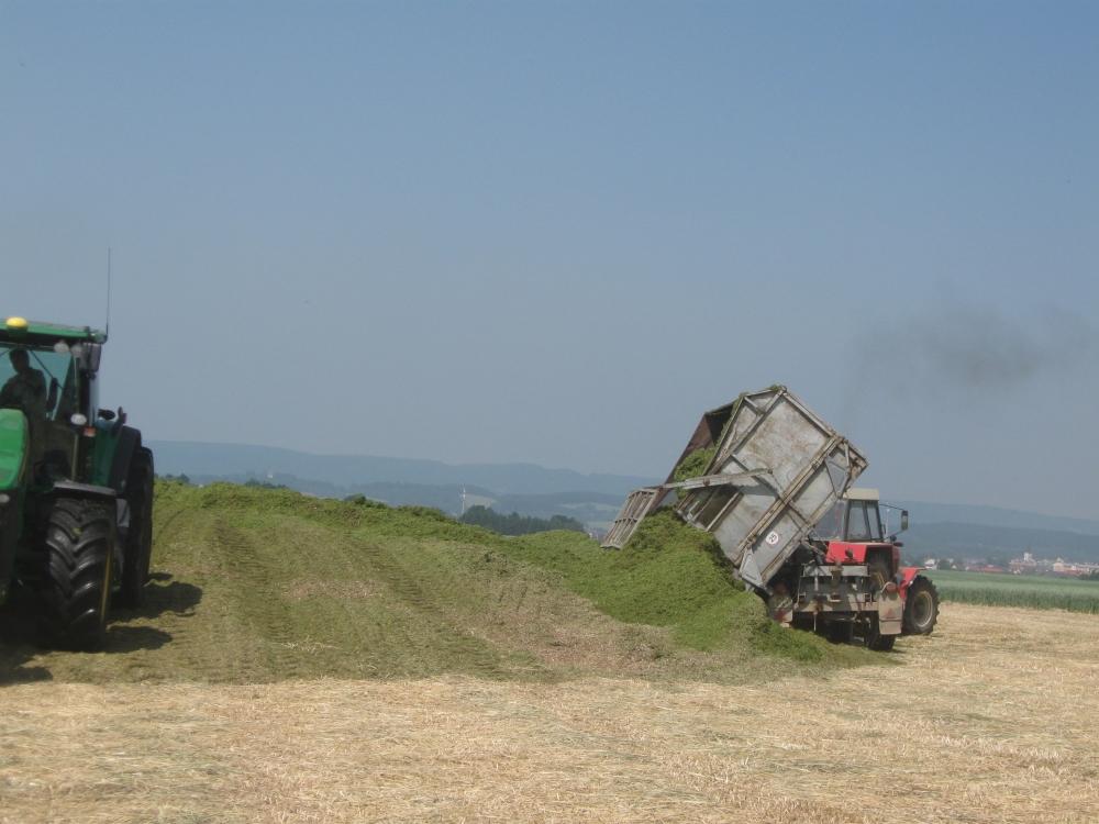 Silážování biomasy Rumexu OK 2 pro využití v BPS