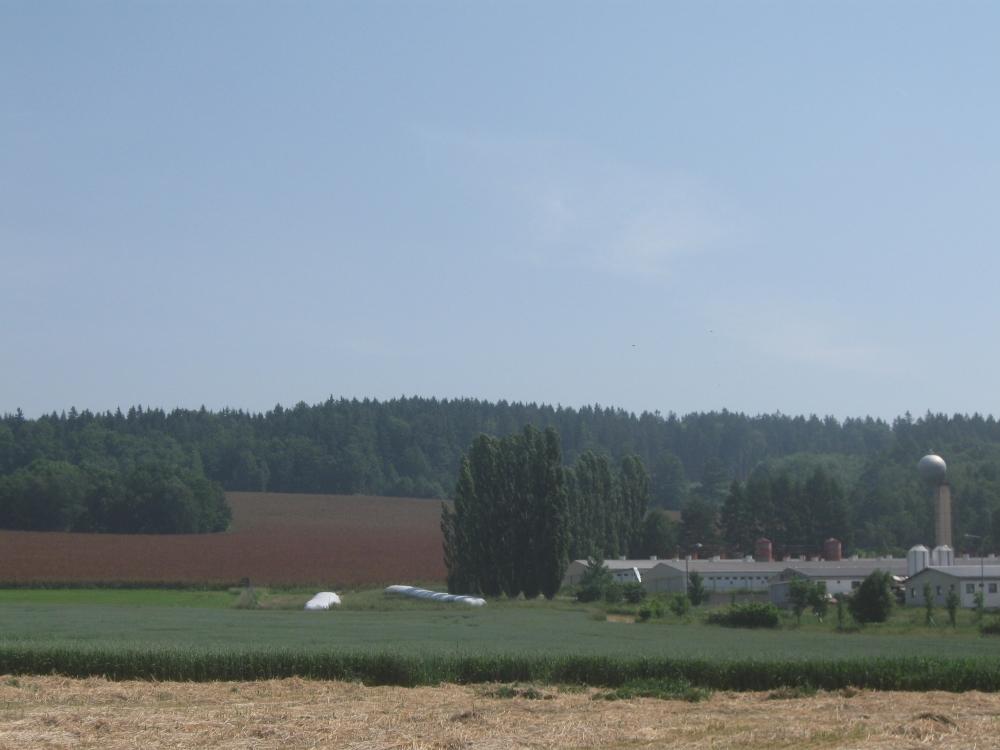 Celkový pohled na provoz ŽV v Žichlínku, v pozadí Rumex OK 2 před první sklizní pro BPS