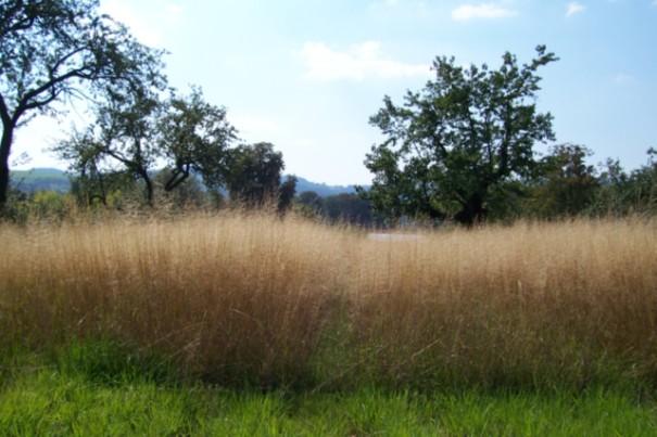 Polní traviny