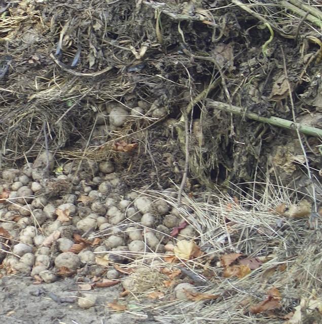 Kompostování BRO z podzimní údržby zahrad u rodinných domů