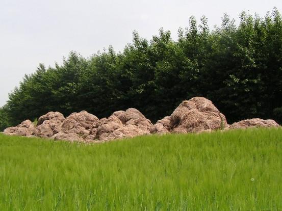 Biomasa jako OZE nás obklopuje ve všech formách