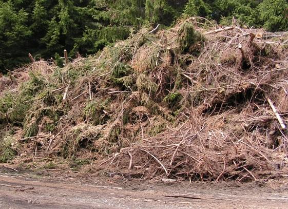 Každá biomasa je využitelná pro energetické účely