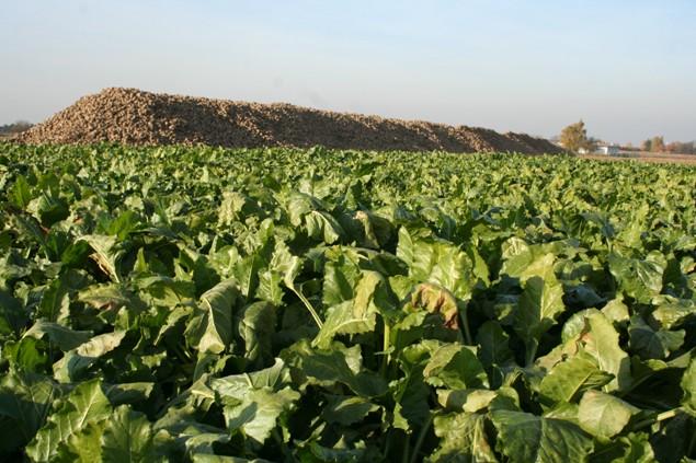 Pro energetickou hodnotu zemědělské biomasy je důležitý termín sklizně