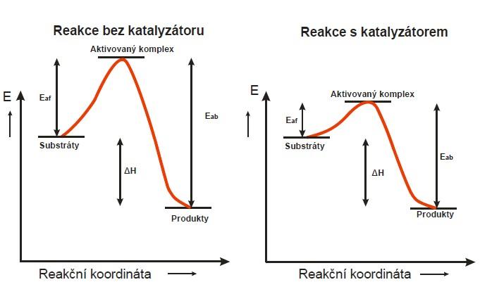 Vliv katalyzátoru na aktivační energii