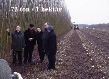 72 tun na hektar