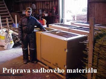 Příprava sadbového materiálu