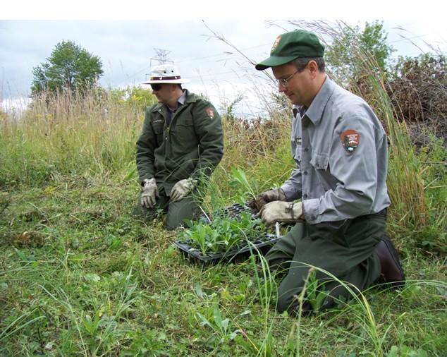 Invazivní rostliny jsou předmětem výzkumu na celém světě