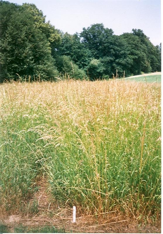 Pro horské a podhorské oblasti může být alternativou využití trvalých travních porostů pro energetické účely