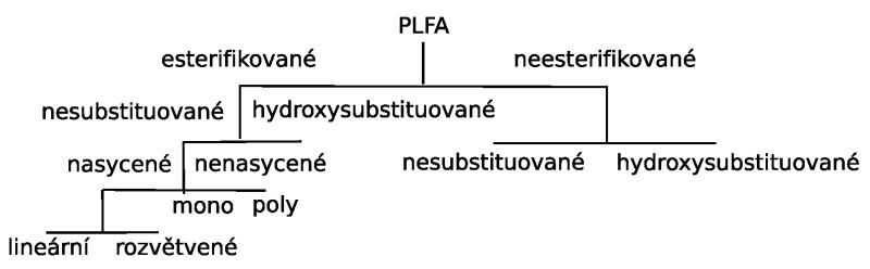 Rozdělení fosfolipidových mastných kyselin (PLFA)