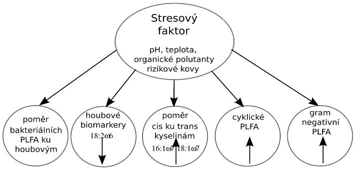 Změny ve struktuře PLFA indukované vlivem různých stresových faktorů