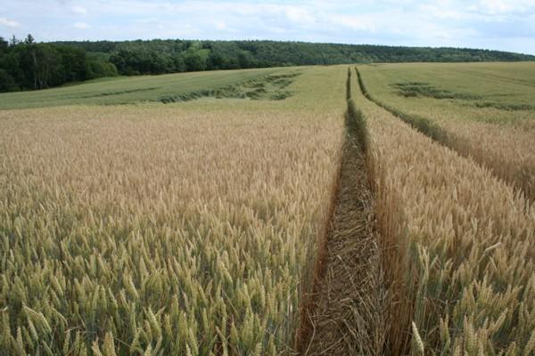 Bioetanol je možno vyrobit prakticky z každé zemědělské plodiny