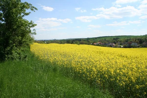 Pěstování plodin k výrobě biopaliv může oživit některé zemědělské oblastí