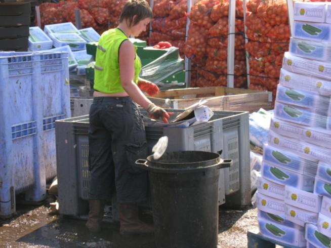Čistenie bioodpadu z veľkoobchodu od nerozložiteľných prímesí.