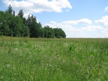 Plocha č. 4, 25.5.2012 - v pozadí šťovík na ploše č.1