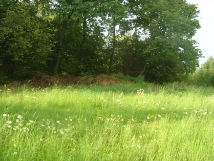 Luční porost, tráva z první seče je na hromadě u lesa