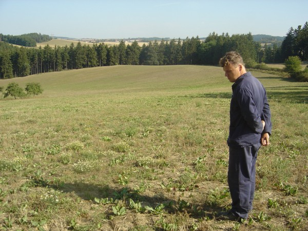 Krmný šťovík na svažitém pozemku v prvém roce vegetace po založení porostu, foto 15. 8. 2007