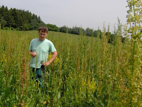 Krmný šťovík na stejném pozemku jako na obr. 1, foto 28.5.2008