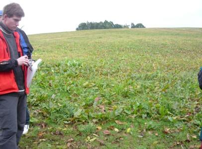 Krmný šťovík v devátém roce vegetace při podzimním obrůstání