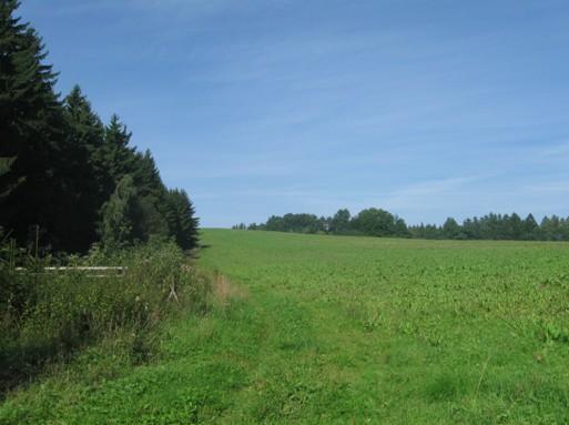 Podzimní porost Rumexu OK 2 (r.2010), vlevo je oplocenka s výsadbou stromků (od r.2003)