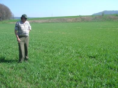 Krmný šťovík 21.4.2009 v desátém roce vegetace