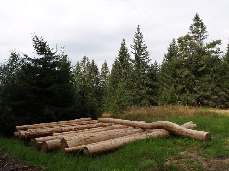 Lesní porost (zdroj: Lesnické práce.cz)