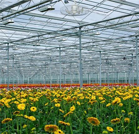 Distribuce tepla ve sklenících