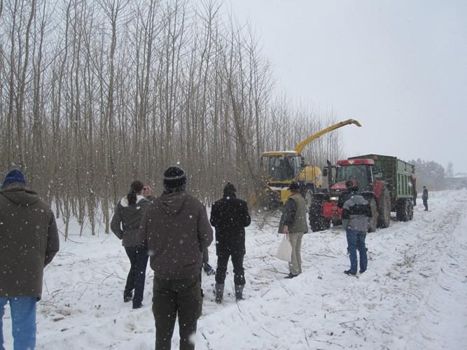 Na první jednofázovou sklizeň řezačkou v ČR se přišlo podívat přes 50 zájemců