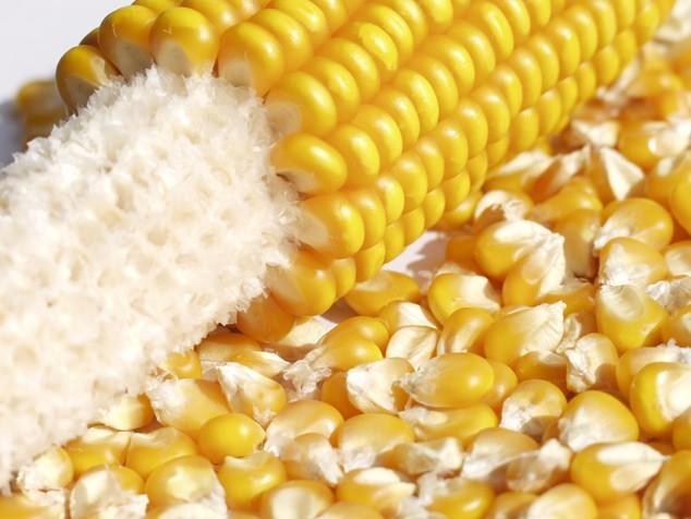 Levným zdrojem palivových alkoholů jsou například odpady při zpracování kukuřice