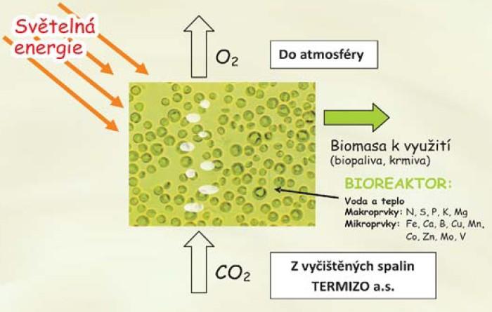 Princip biokonverze oxidu uhličitého do řasové kultury