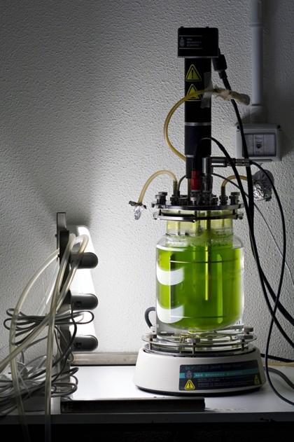 Jedna z mála možností environmentálně čisté technologie zpracování CO2 je kultivace zelených autotrofních řas