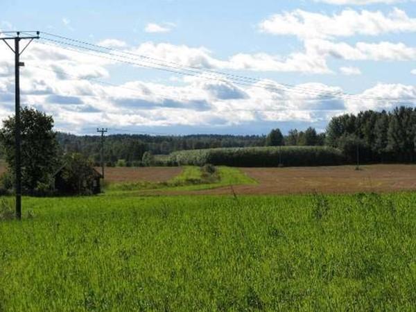 Plantáž vrb [Foto : N.-E. Nordh, SLU]