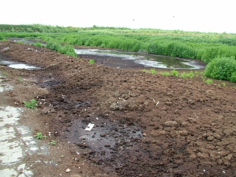 Vysychající laguna kejdy zarůstá plevelem