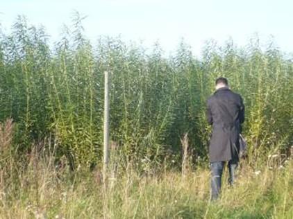 Vrbová plantáž