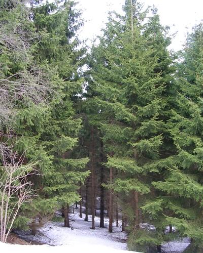 Lesní porost