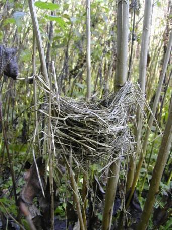 Rychle rostoucí dřeviny vytvářejí v krajině nová stanoviště a poskytují prostor živočichům